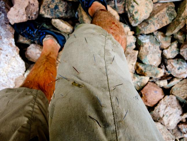 Spiny plants and bloody legs after a bushwhacking section./ヤブ漕ぎ後、茨の刺だらけになったパンツと血だらけの足