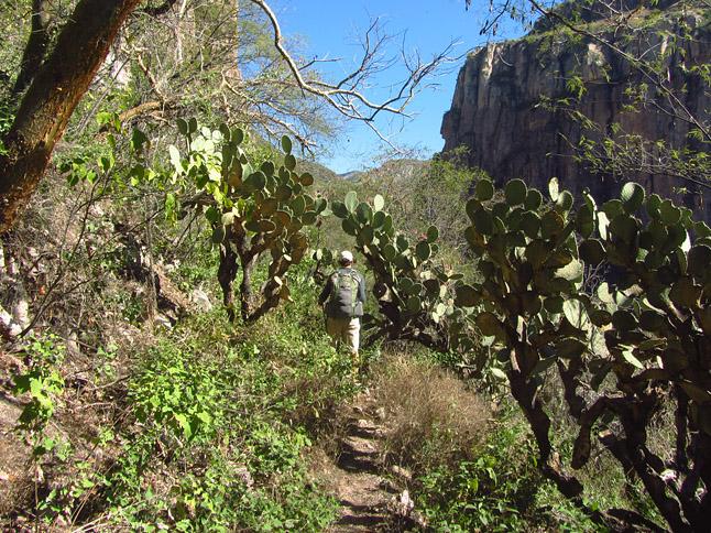 Walking on an old Tarahumara trail through the desert vegetation. (砂漠地帯に通る古くからあるタラウラマ族が使った道を歩く)