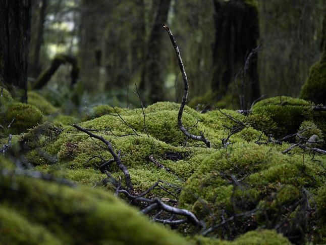 豊かな苔の世界。ニュージーランドらしい植生の景色。