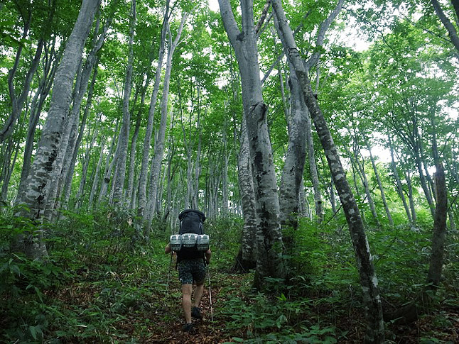 shinetsu_trail2