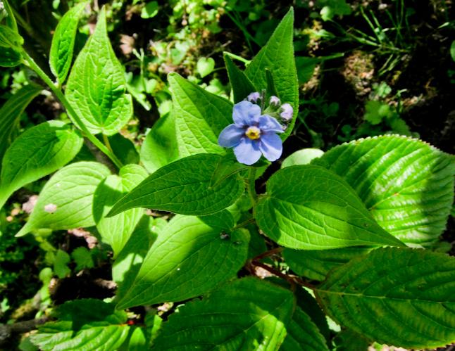 季節が春になり、花々が咲き始めた。One of the many flowers that came alive in the spring in India.