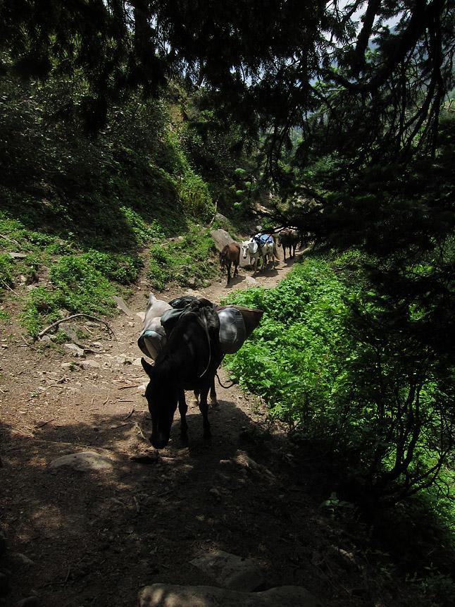 馬のキャラバンが遠方の村へ物資を運んでいた。A train of horses bringing supplies to a rural village.