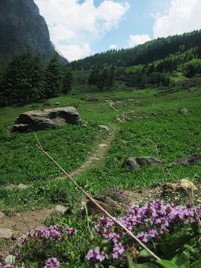 ウッタル・プラデーシュ州の花と草原。Flowers and open meadow in the Utter Pradesh.