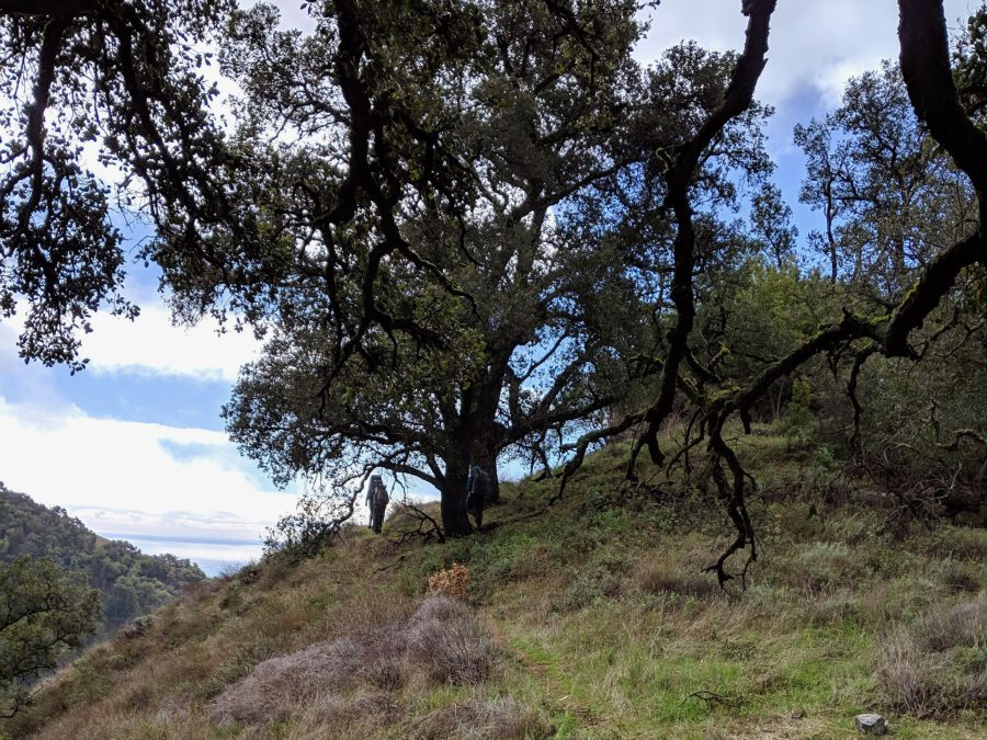 Hiking in the oak forest in Big Sur. Photo by Liz Thomas (1)