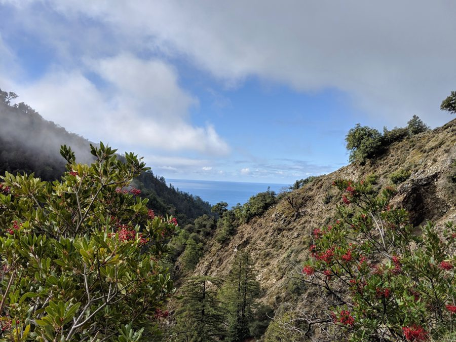Ocean view from the side of a mountain in Big Sur. Photo by Liz Thomas (1)